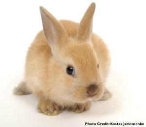 baby-rabbit-att