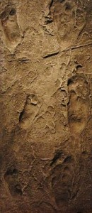 Hominid footprints Leakey discovered.